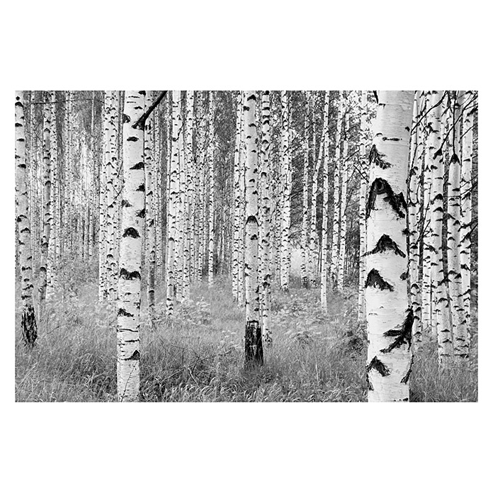 Komar Into Illusions Fototapete Woods (4-tlg., 368 x 248 cm, Vlies) -