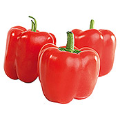 Paprika Midired (Capsicum anuum 'Midired' , Topfgröße: 12 cm)