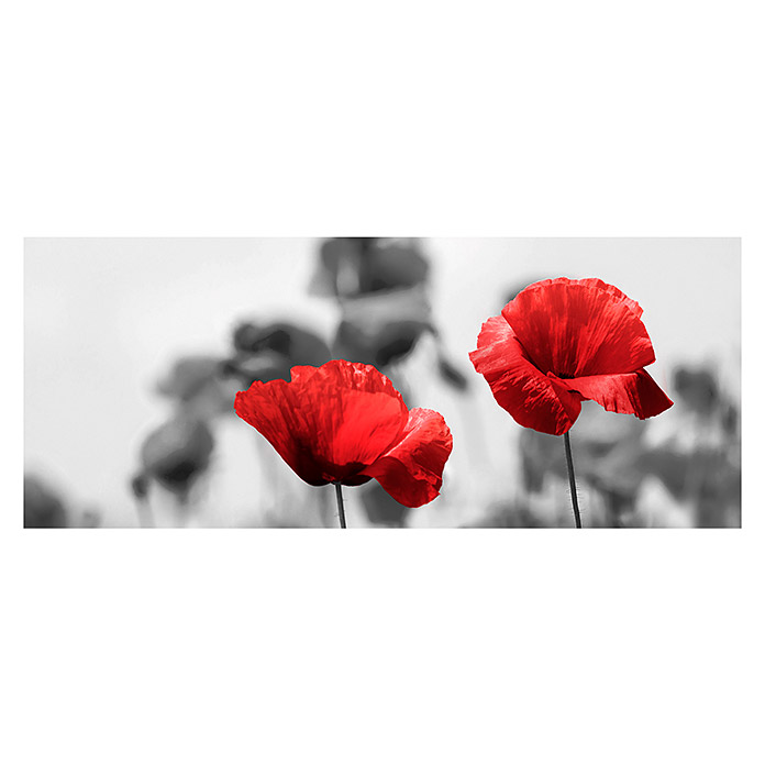Glasbild Red Poppy (Roter Mohn, 125 x 50 cm, Glas) -