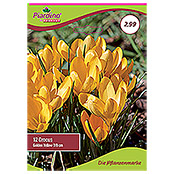 CROCUS GOLDEN YELLOW7/8 , GELB , 10 STKPIARDINO