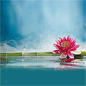 IR THERMOCOVER 60x80cm PINK WATERLILY