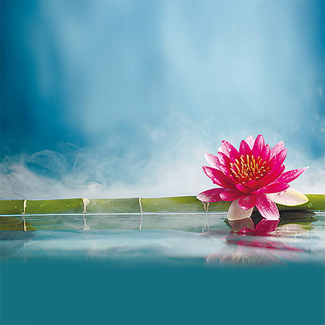 Admiral IR-Thermocover  (80 x 60 cm, Pink Waterlily)