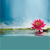 IR THERMOCOVER 60x120cm PINK WATERLILY