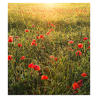 Komar Stefan Hefele Edition 2 Fototapete Poppy World (5-tlg., 250 x 280 cm, Vlies)