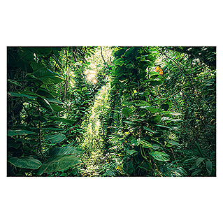Komar Stefan Hefele Edition 2 Fototapete Green Leaves (9-tlg., 450 x 280 cm, Vlies)