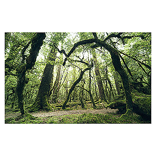 Komar Stefan Hefele Edition 2 Fototapete Ancient Green (9-tlg., 450 x 280 cm, Vlies)