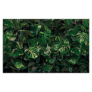 Komar Pure Fototapete Tropical Wall (3-tlg., 400 x 250 cm, Vlies)