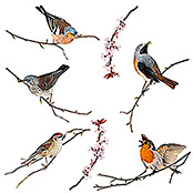 Komar Fenstersticker (Birds, Bunt, 31 x 31 cm)