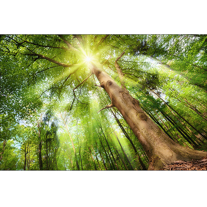 ProArt Young Living Decopanel (Glow in the wood, 115 x 75 cm)